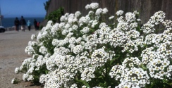 Flower Burst