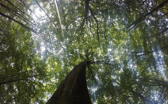Canopy Blur