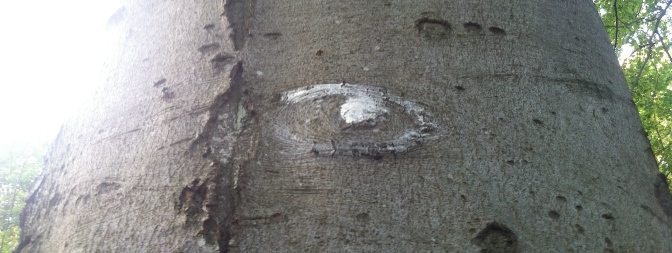 Eye Of The Tree