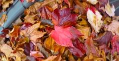 Fall Pile