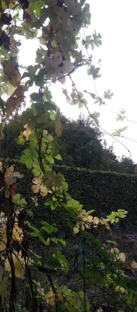 Leafy Ramp