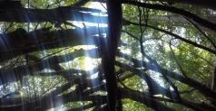 Tree Tent Blur