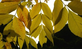 Yellow Gathering