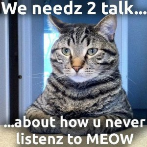 needz cat