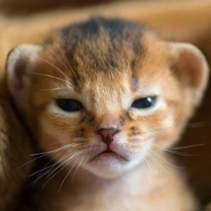 squint kitten