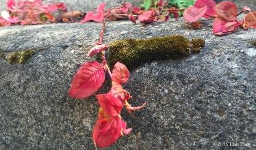 Leafy Bumpy