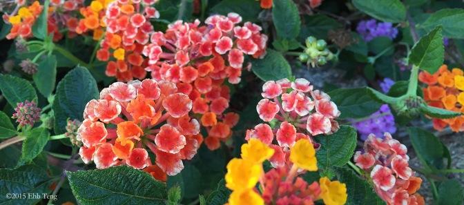 Floral Pop