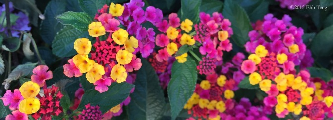 Mini Blooms